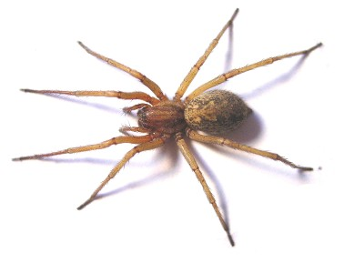 The Hobo Spider: He Ain't No Charlotte | AtlanticVetSeattle.com