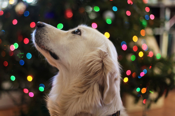 Pets light up our world | AtlanticVetSeattle.com