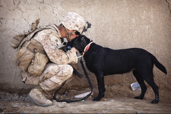 Dogs for Soldiers: Healing for PTSD | AtlanticVetSeattle.com