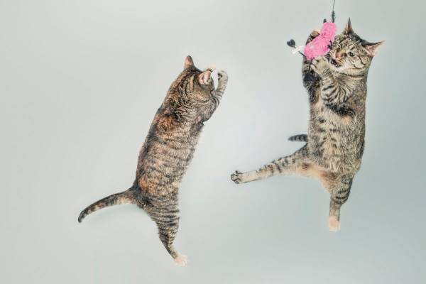 ACL Injuries in Cats and Dogs | AtlanticVetSeattle.com