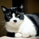 Bubba the Cat | Atlantic Veterinary Hospital, Seattle