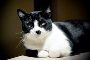 Bubba-the-Cat1