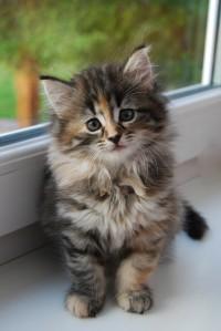 kitten-1244768_58979570-e1284876648692