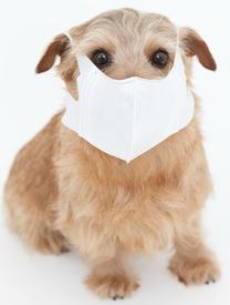Dog Flu Outbreak in Seattle: Get your dog vaccinated at Atlantic Veterinary Hospital, Seattle