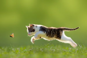 How to keep your cat safe outdoors | AtlanticVetSeattle.com