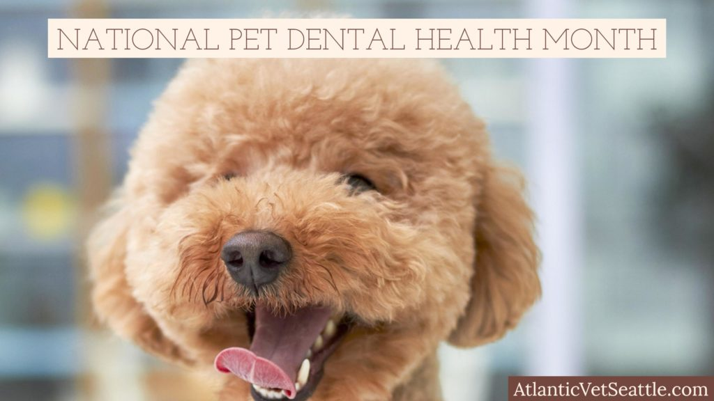 National Pet Dental Health Month | AtlanticVetSeattle.com
