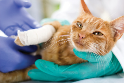Be Prepared for Pet Medical Emergencies – Is Pet Insurance Right for You? | AtlanticVetSeattle.com