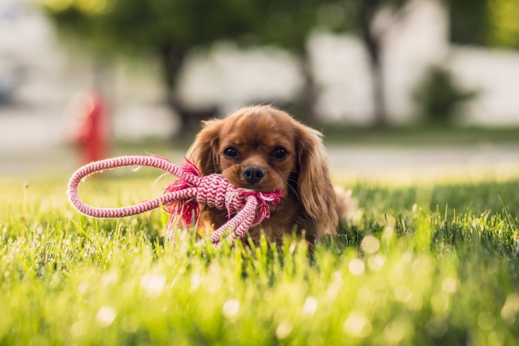 How to Prevent Lyme Disease in Dogs and Cats | AtlanticVetSeattle.com