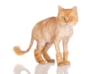 4 remedies for hairballs in cats atlantic vet seattle 4 lion cuts gumiabroncs Choice Image