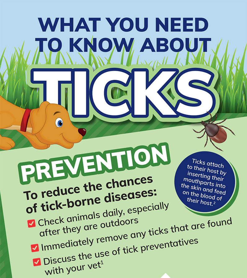 What you need to know about ticks | AtlanticVetSeattle.com