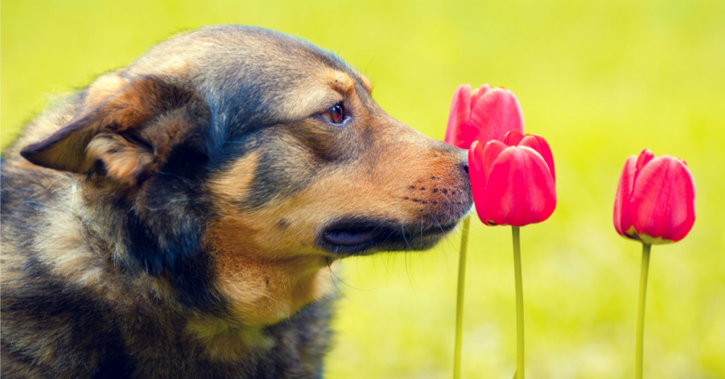 5 Ways to Give Your Dog Mental Exercise   AtlanticVetSeattle.com