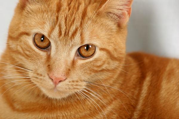 6 Benefits of Veterinary House Calls | AtlanticVetSeattle.com