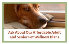 Affordable Adult & Senior Pet Wellness Plans | AtlanticVetSeattle.com