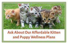 Affordable Kitten & Puppy Wellness Plans | AtlanticVetSeattle.com
