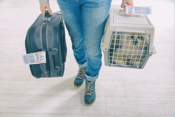 Traveling Domestically or Internationally With Your Pet? You May Need a Health Certificate | AtlanticVetSeattle.com