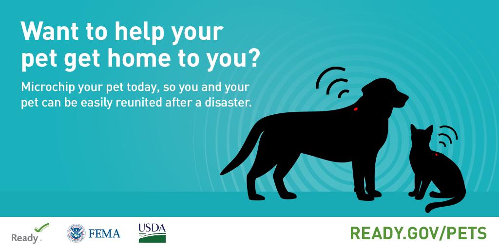 5 Disaster-Preparedness Tips for Pet Owners | AtlanticVetSeattle.com