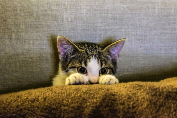 Why is My Cat Suddenly Sneezing So Much?   AtlanticVetSeattle.com