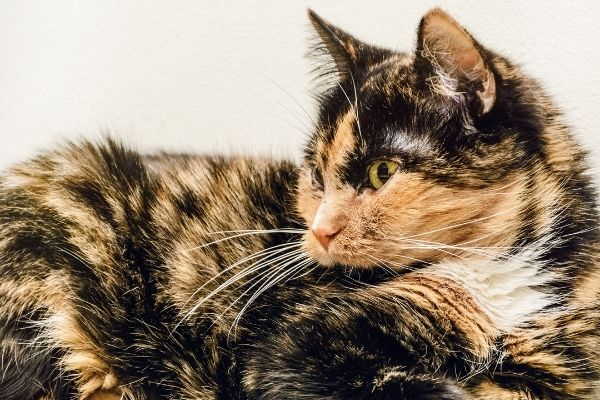 How to determine whether your cat is a senior | AtlanticVetSeattle.com