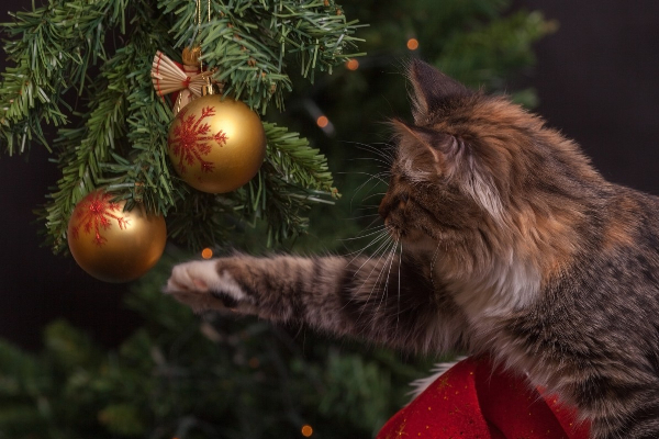 4 Holiday Hazards to Keep Your Cat Away From | AtlanticVetSeattle.com