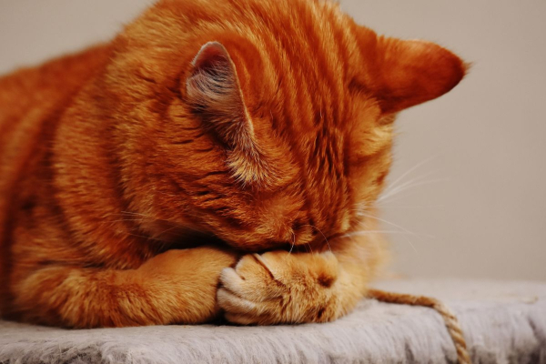 7 Common Household Items That Can Kill Your Curious Cat | AtlanticVetSeattle.com