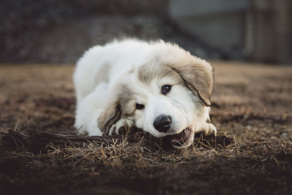 19 Household Items That Can Poison Your Dog | AtlanticVetSeattle.com