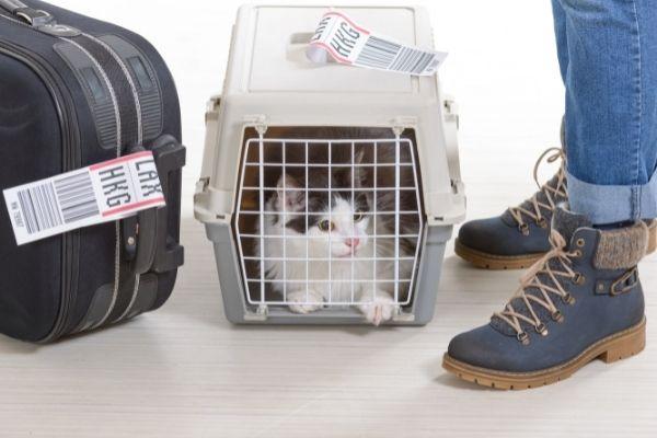 cat in crate at airport