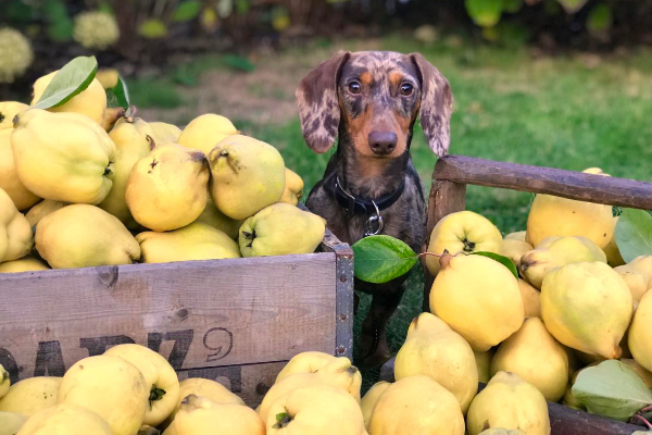 Why Grain-Free & BEG Diets May Be Harming Your Dog | AtlanticVetSeattle.com