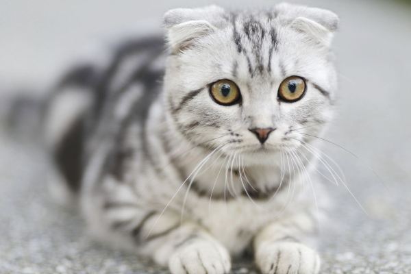 The Risks of Feeding Your Cat a Raw or BARF Diet | AtlanticVetSeattle.com