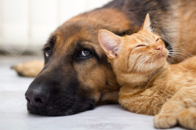 Marijuana: Concerns and Possible Benefits in Veterinary Medicine | AtlanticVetSeattle.com