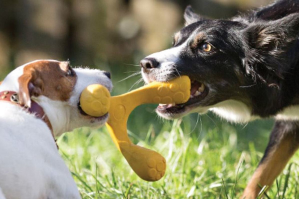 Why Dogs Chew Stuff, and How to Encourage Appropriate Chewing | AtlanticVetSeattle.com