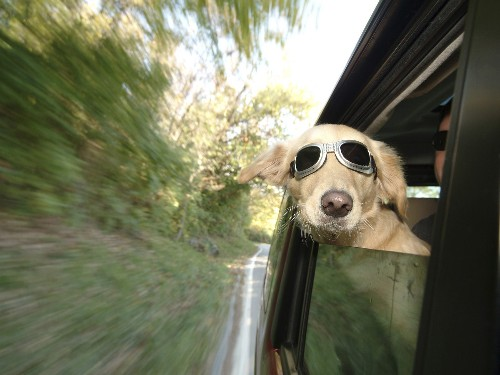 Effective Medications for Motion Sickness in Dogs | AtlanticVetSeattle.com