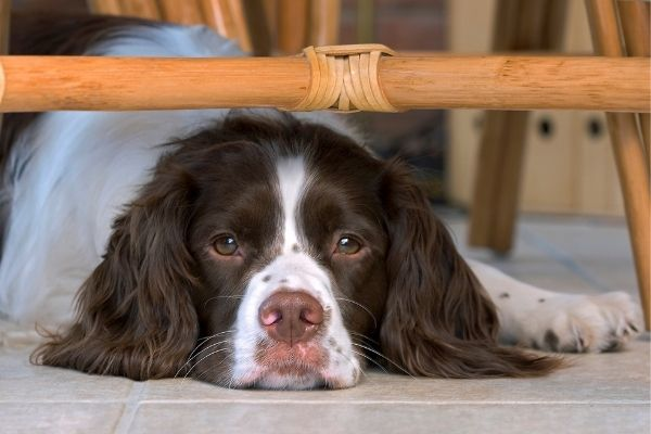 Pet Health Insurance: Pros and Cons | AtlanticVetSeattle.com