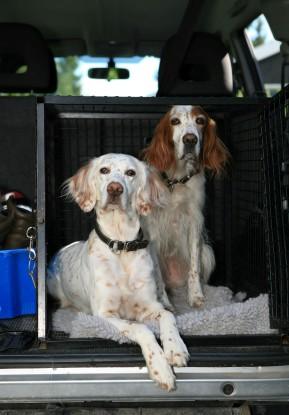 3 Safety Tips for Traveling in a Car with a Pet