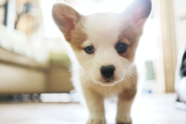 Pandemic Puppies: 15 Tips for Socializing Your Puppy in a Socially Distant World | atlanticvetseattle.com