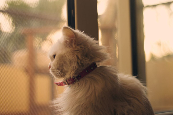 7 Steps to Prepare Your Pet for the End of Working from Home | atlanticvetseattle.com