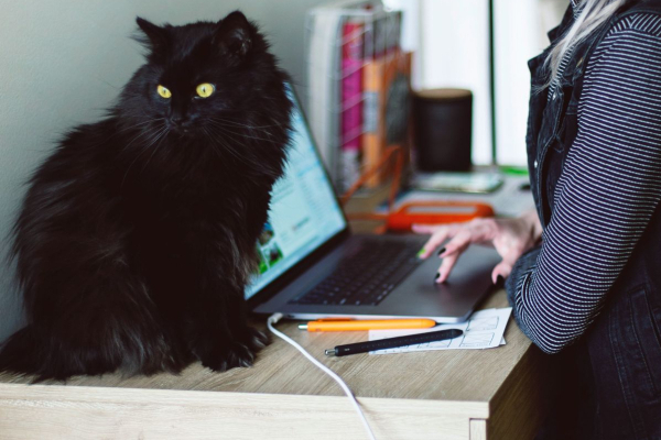 Tips for Working from Home with Your Cat or Dog | atlanticvetseattle.com