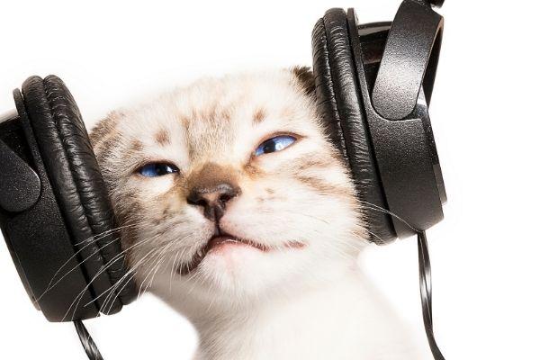Environmental Enrichment Activities for Indoor Cats | AtlanticVetSeattle.com