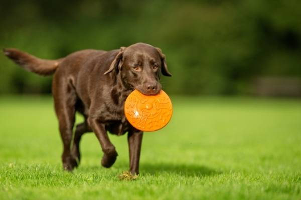 Cruciate Ligament Injuries in Dogs and Cats: A Complete Guide | atlanticvetseattle.com