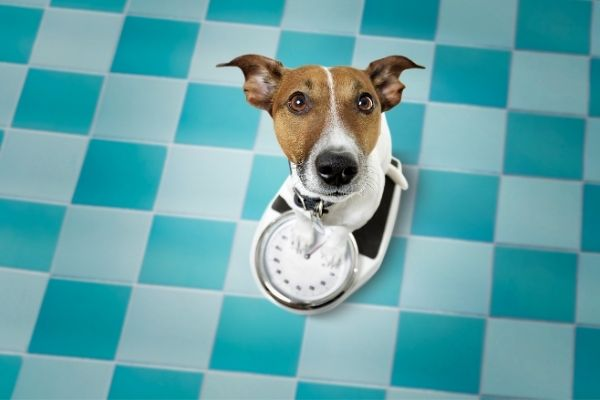 Weight Loss Tips for Dogs and Cats | atlanticvetseattle.com