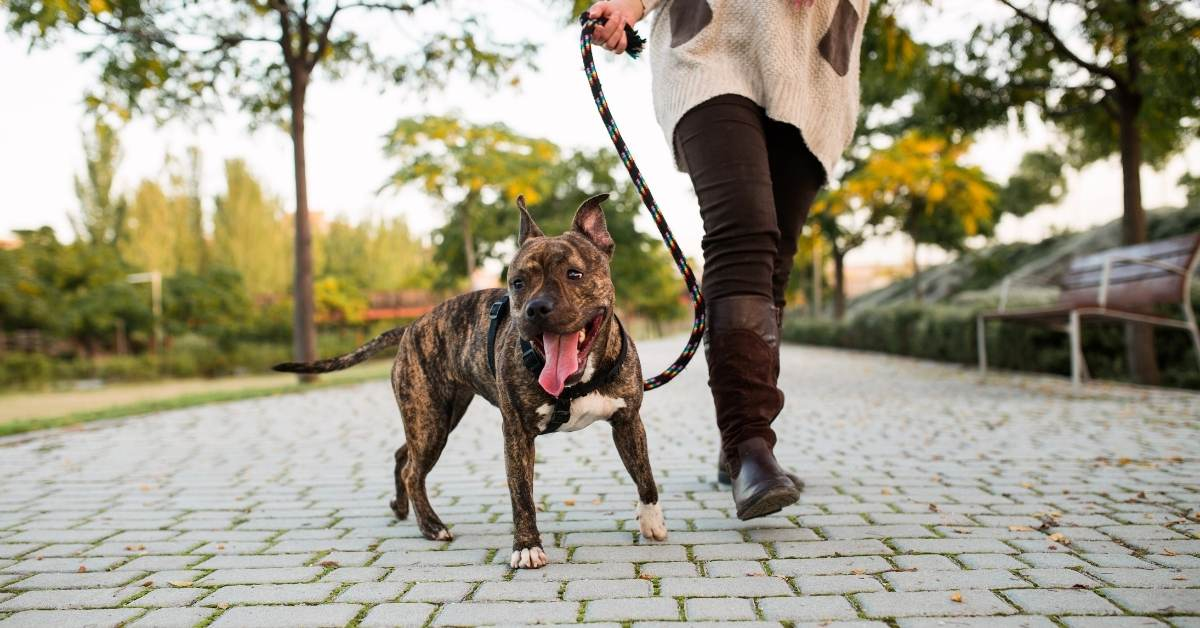 Why Your Dog is the Perfect Workout Buddy | atlanticvetseattle.com