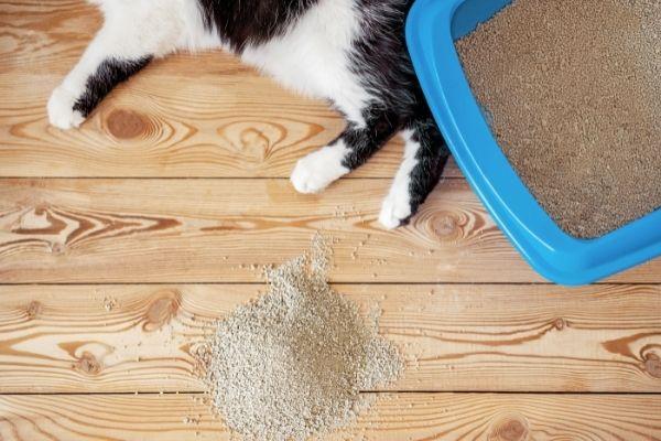 Cat Behavior Consultations | atlanticvetseattle.com