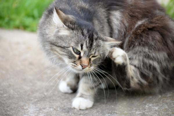 What You Need to Know About Fleas, Ticks and Parasite Preventives | atlanticvetseattle.com