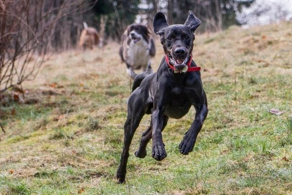 10 Tips for a Safe and Fun Off-Leash Dog Park Outing | AtlanticVetSeattle.com