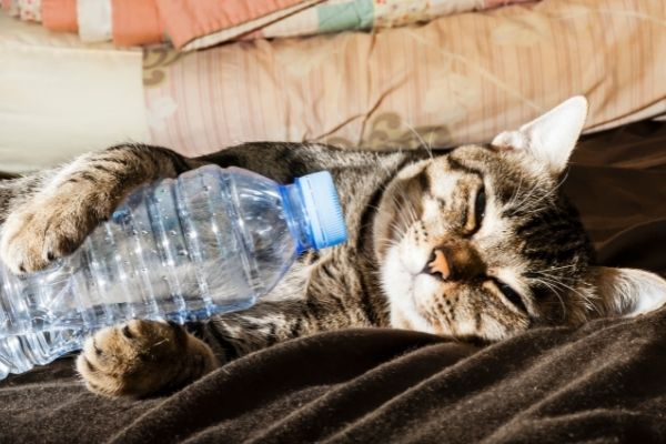 cat holding a water bottle