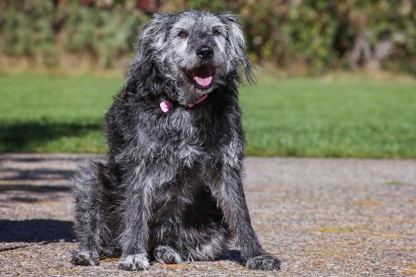 large mixed-breed dog