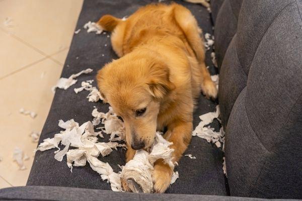 puppy shredding toilet paper