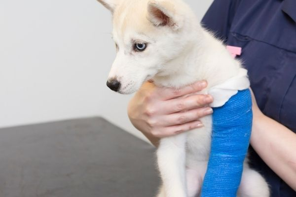Licensed Veterinary Nursing: A Recession-Proof Career that Combines a Love of Animals and People